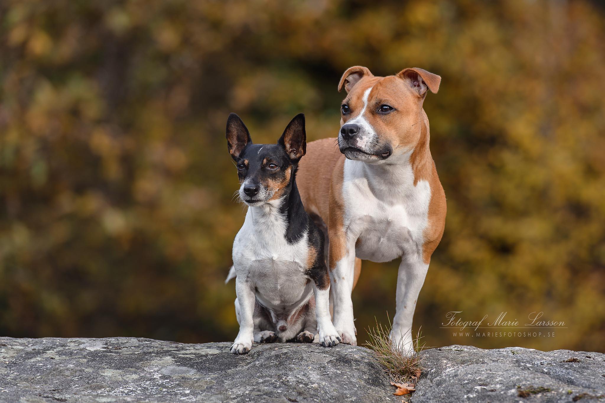 Hundfoto Stenungsund